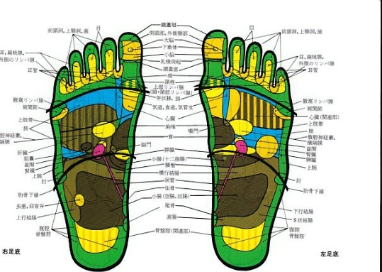 ハンネマルカート女史『足の反射区』医道の日本社より